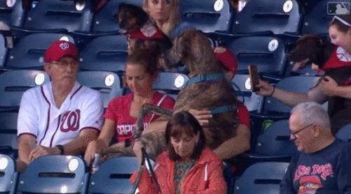 Привел друга посмотреть бейсбол