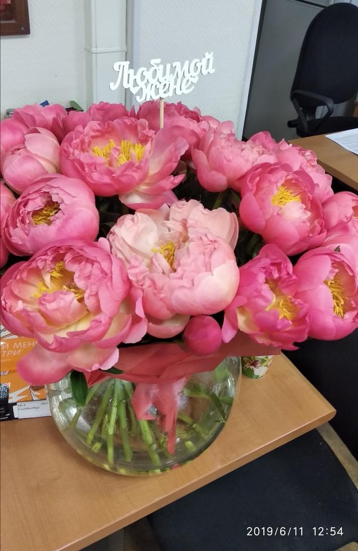 Голландские пионы - чудо селекции! Цветы, Селекция, Длиннопост