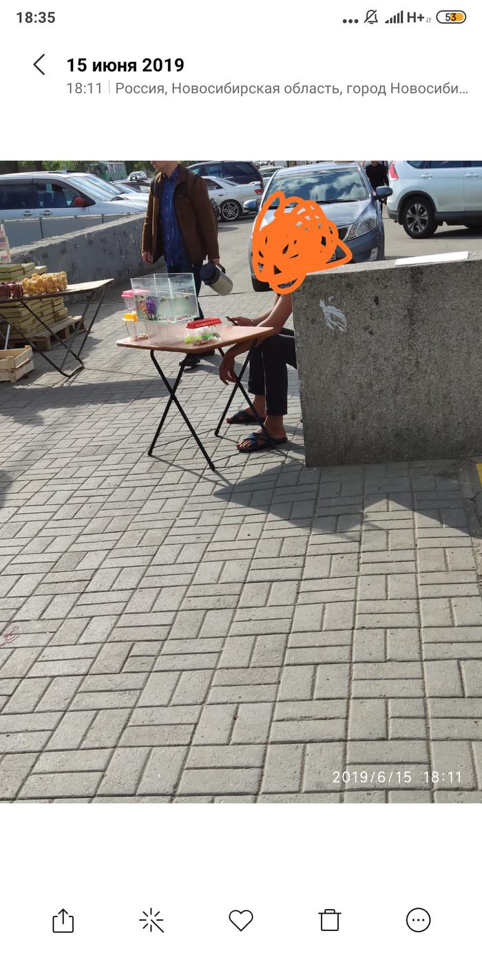 Продажа красноухих черепах в Новосибирске Красноухая черепаха, Вопрос, Юристы, Новосибирск, Длиннопост