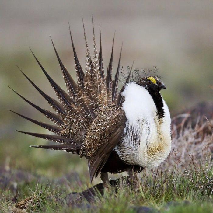 Птица - два Птицы, Красота природы, Длиннопост