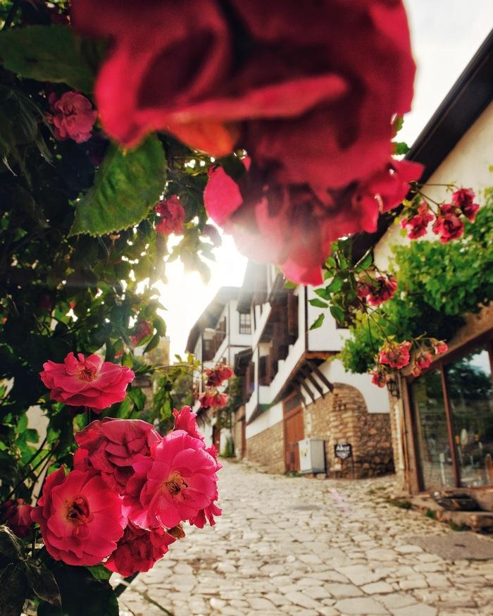 Май в Сафранболу. Турция, Путешествия, Кругосветное путешествие, История, Фотография, Цветы