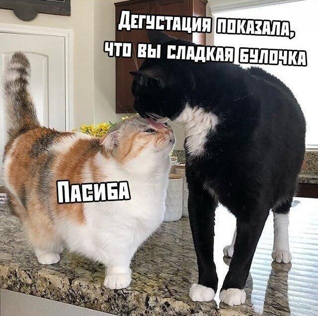 Это были мои лучшие отношения Юмор, Техподдержка, Кот
