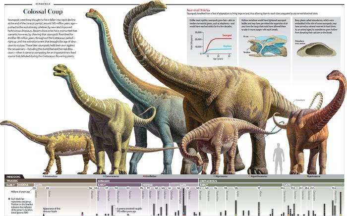 Бедренная кость Зауропода Палеонтология, Интересное, Познавательно, Кости, Вымерший вид, Зауроподы, Раскопки, Динозавры