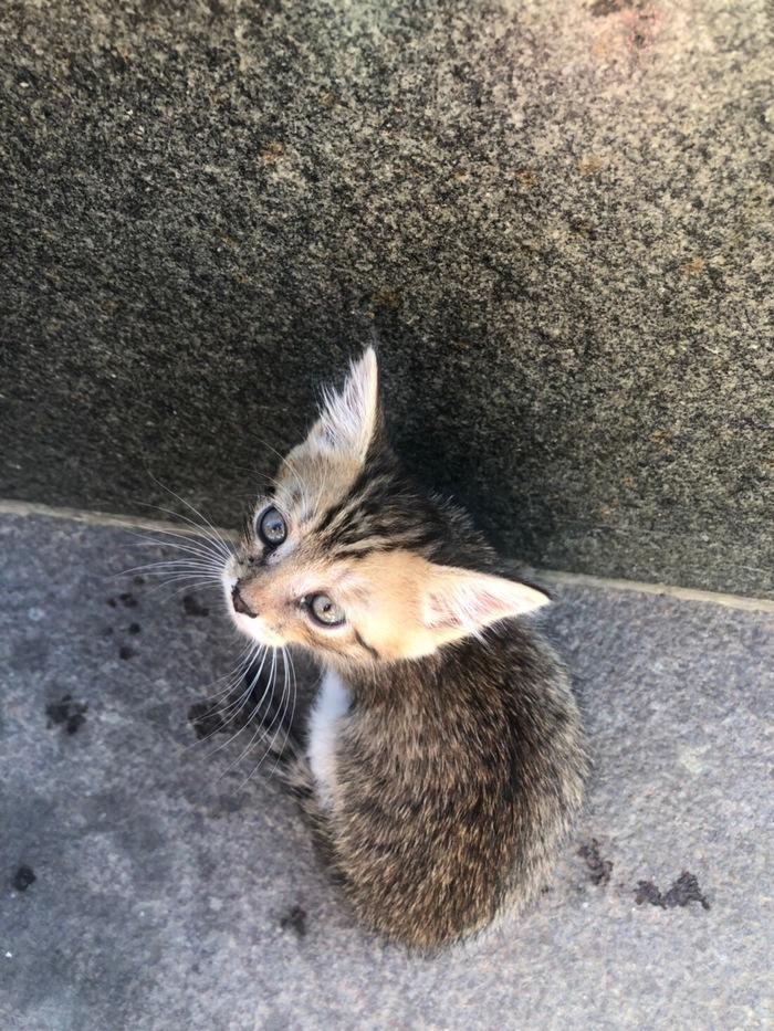 Котёнок в добрые руки Потеряшка, Кот, Москва, Без рейтинга, В добрые руки