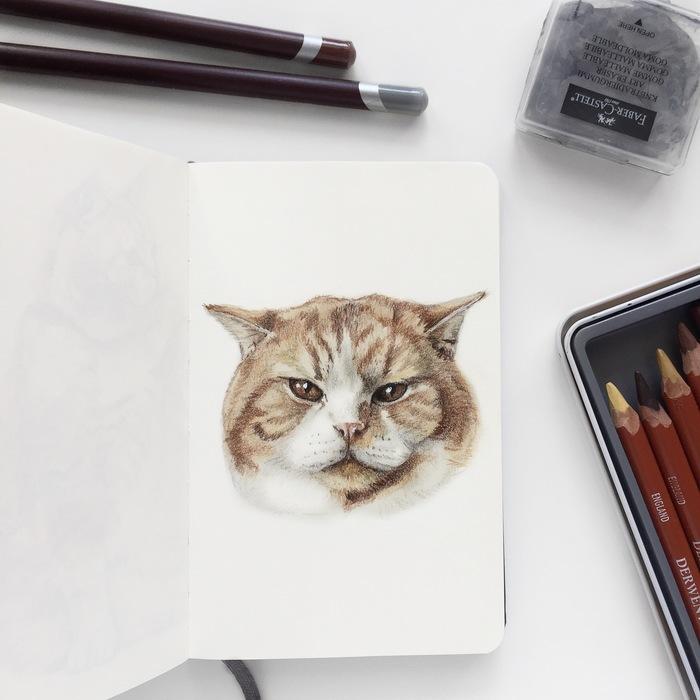 Ещё один рыжий кот Кот, Портреты животных, Цветные карандаши, Арт, Питомец, Видео, Животные, Анималистика, Рисунок