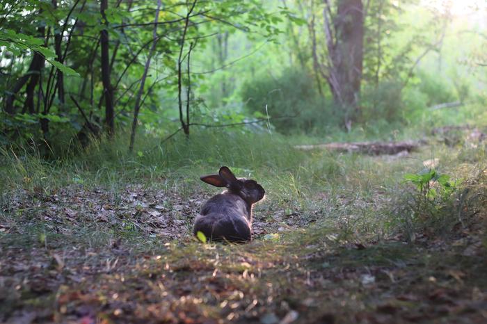 Следуй за кроликом