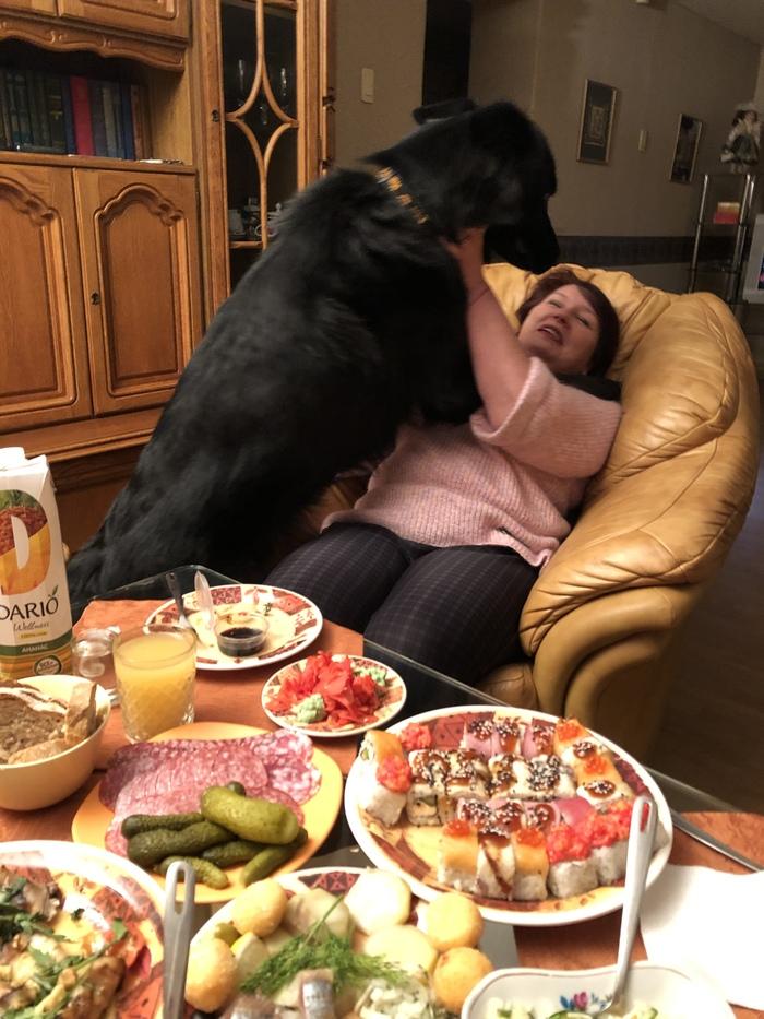 Кобелюня ин да хаус. Как мой пёс маминых подруг «очаровал». Немецкая овчарка, Мачо и ботан, Мачо, BBC, Поцелуй, Длиннопост