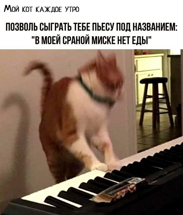 Кошачий Шопен
