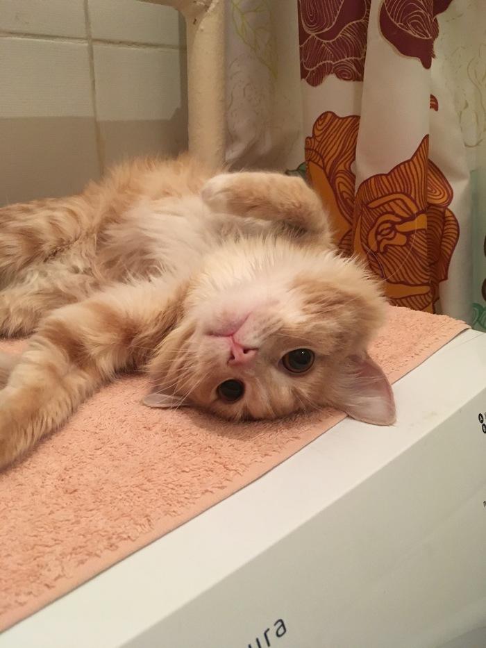 Очередной Паштет. Кот, Фотография, Паштет, Любимое место, Обормот, Длиннопост