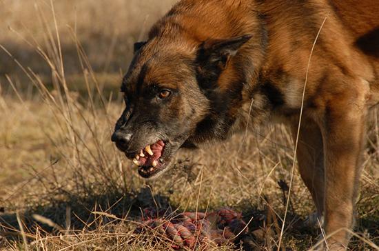 Как в Финляндии с бродячими собаками поступают, в том числе с российскими Права человека, Россия, Финляндия, Бродячие собаки, Полиция, Отстрел бродячих собак, Длиннопост