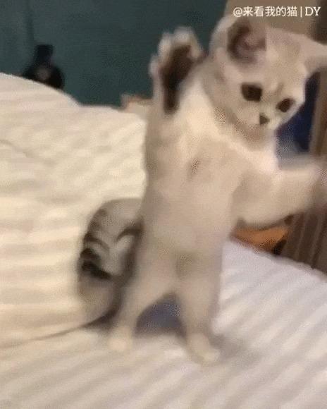 Я злой и страшный серый кот! Кот, Котомафия, Домашние животные, Лапки, Ходьба, Милота, Видео, Гифка
