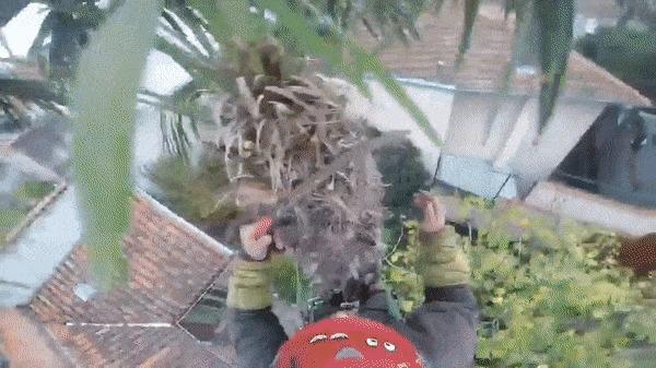 Что может пойти не так, если пилить пальму бензопилой?