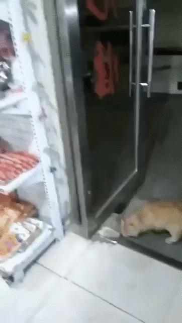 Пока охранник спит Кот, Животные, Кража, Сосиски, Магазин, Гифка
