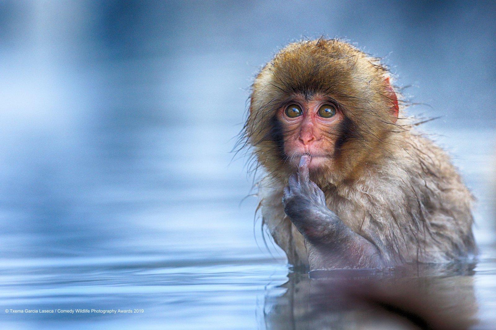 Самые смешные фото дикой природы названы 40 финалистов конкурса, 2017