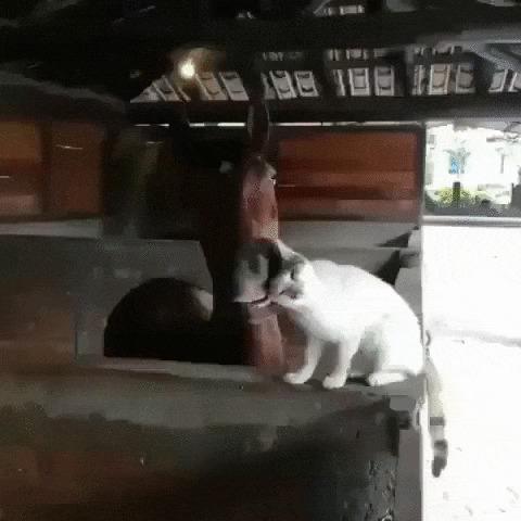 Все любят котиков Кот, Котомафия, Лошади, Животные, Ласка, Милота, Гифка