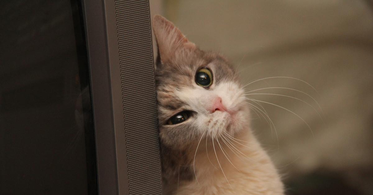 Фото кота скучающего