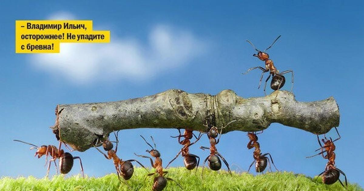 Фото приколы муравьев