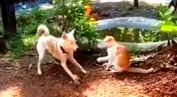 Собака из Шаолиня