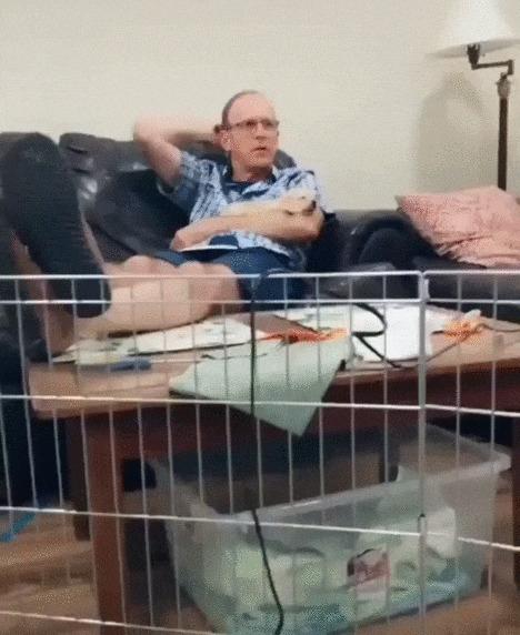 Отец говорил, что в этом доме собак никогда не будет! Собака, Щенки, Лабрадор, Домашние животные, Хозяин, Отец, Друзья, Гифка