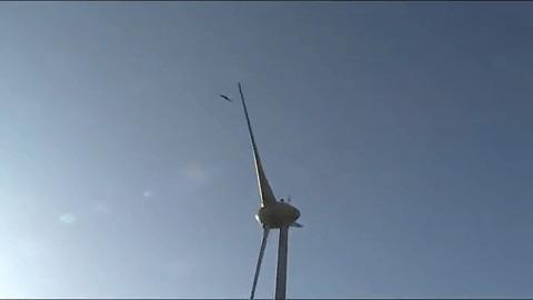 Беспощадный ветряк Экология, Энергетика, Ветряк, Орел, Гифка