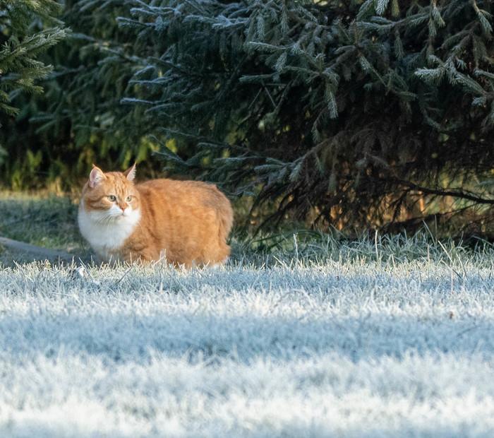 Winter is coming! Кот, Котомафия, Длиннопост