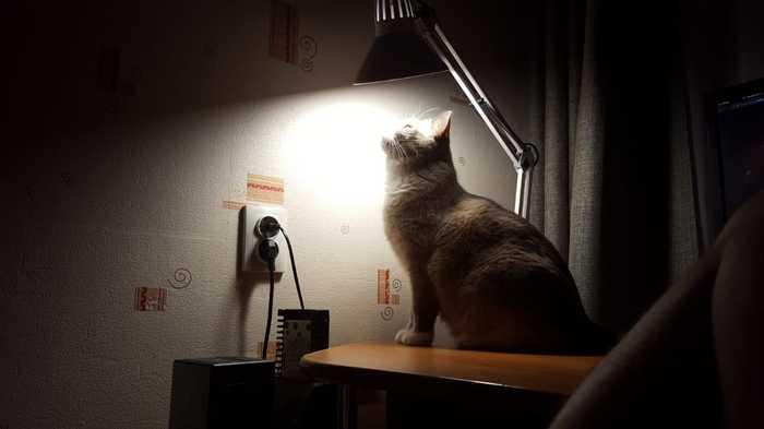 Котик по имени Коля) Кот с лампой, Кот, Длиннопост