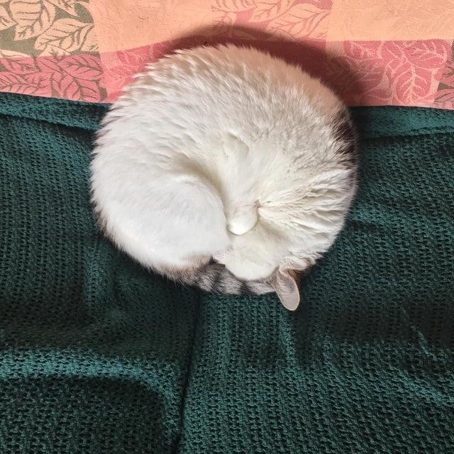 Идеальный рогалик Кот, Котомафия, Милота