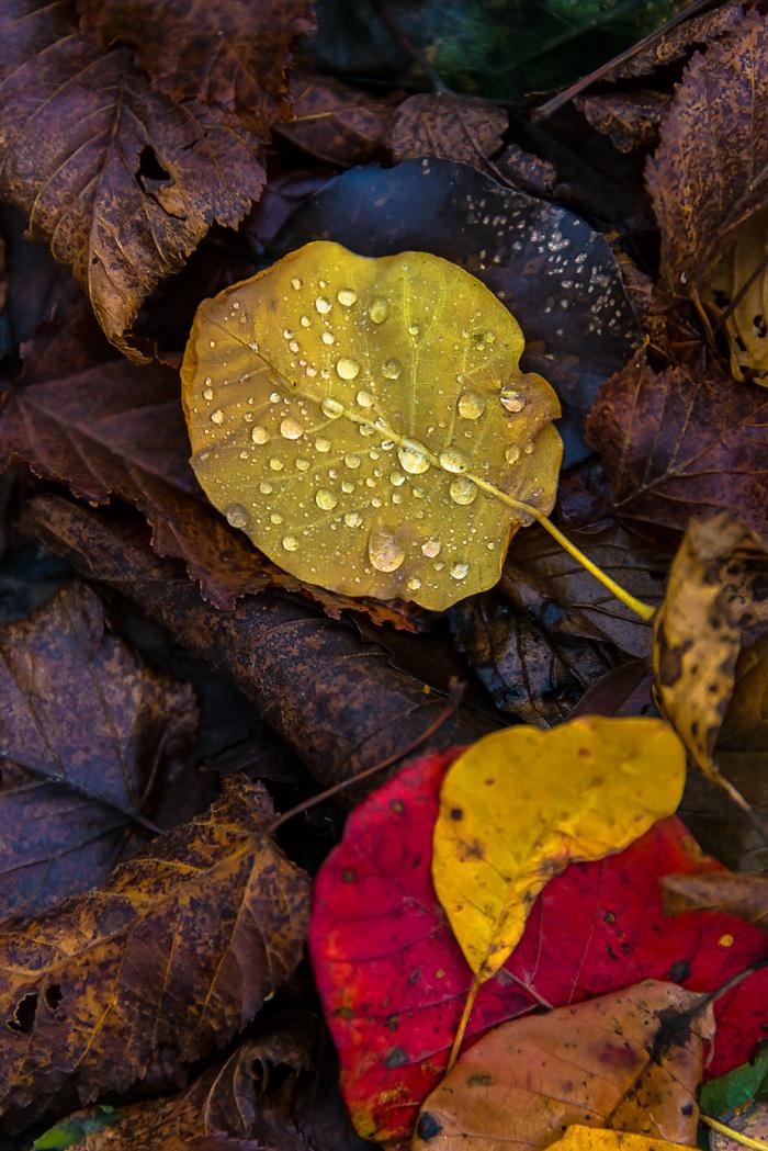 Про опавшие листья Опавшие листья, Осенние листья, Дождевые капли, Длиннопост