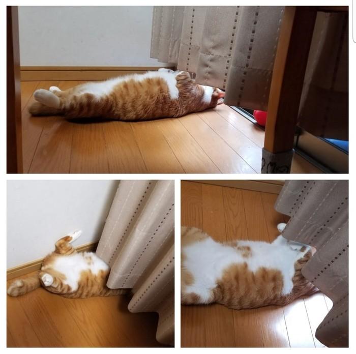 Когда обидели кота и он не желает вас видеть)