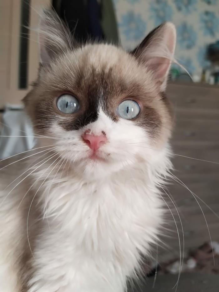 О.О Кот, Удивление, Фотография