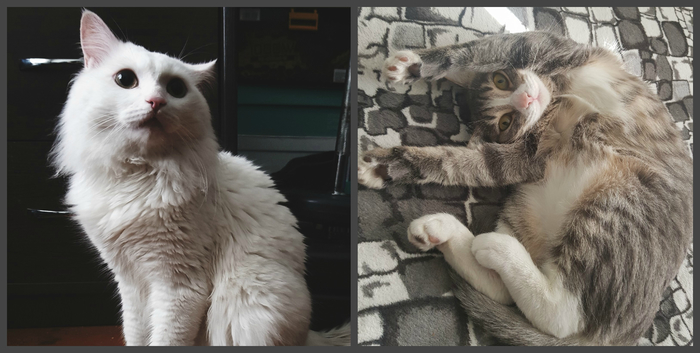 Моя тяга к жизни Онкология, Кот, Жизнь, Длиннопост