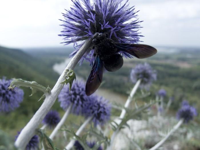 Цена пчелы и цена горы Горы, Шиханы, Природа, Закон, Радий Хабиров, Не политика, Длиннопост, Без рейтинга