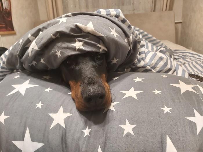 Холодно даже собачкам