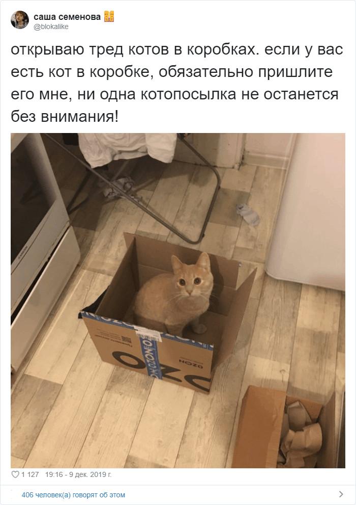 Коты просто созданы для коробок, а коробки  для котов