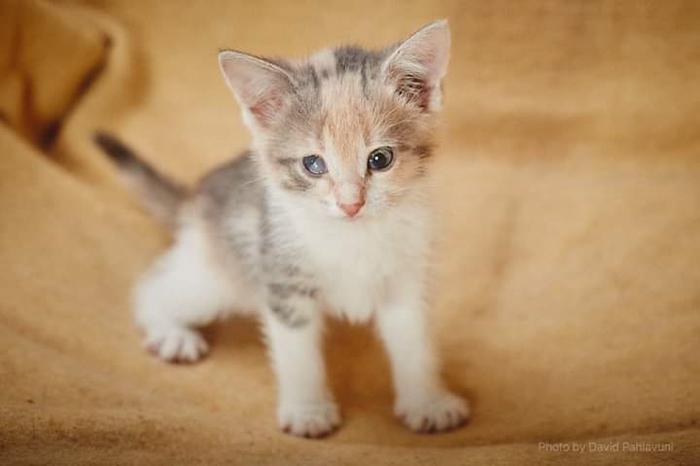 Котяты ищут Человеков Кот, Котята, В добрые руки, Приют, Животные, Длиннопост