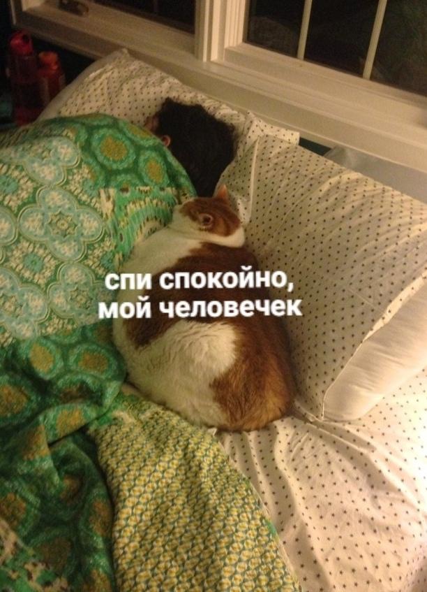 Моя ты лапа)