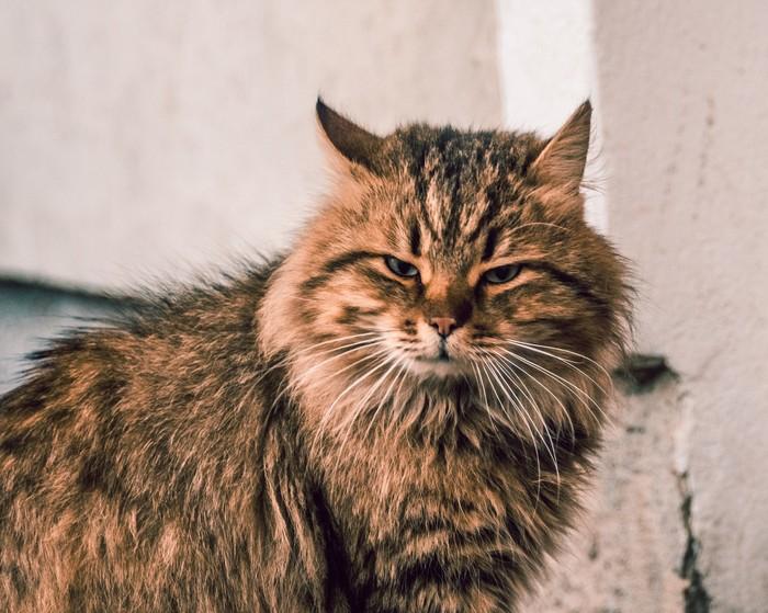 Коты попавшие в объектив