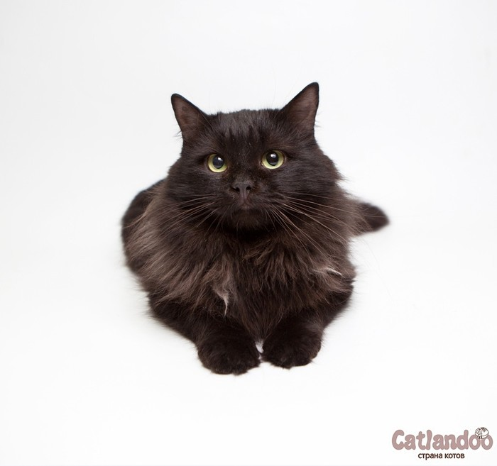 Неотразимый котик Агат ищет семью! Приют для животных, Москва, Кот, Длиннопост