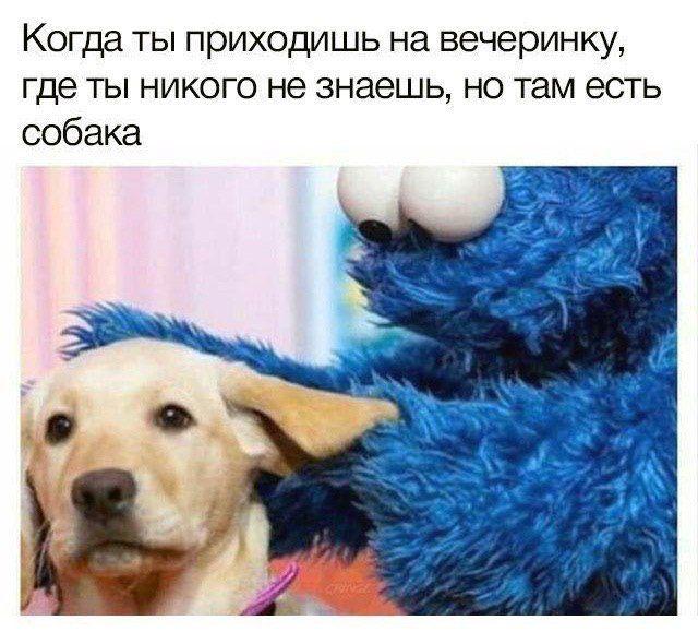 Собака на вечеринке