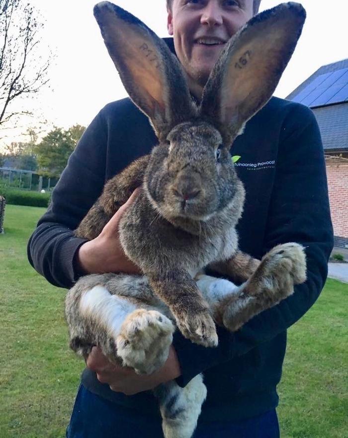 Фото самого большого кроля