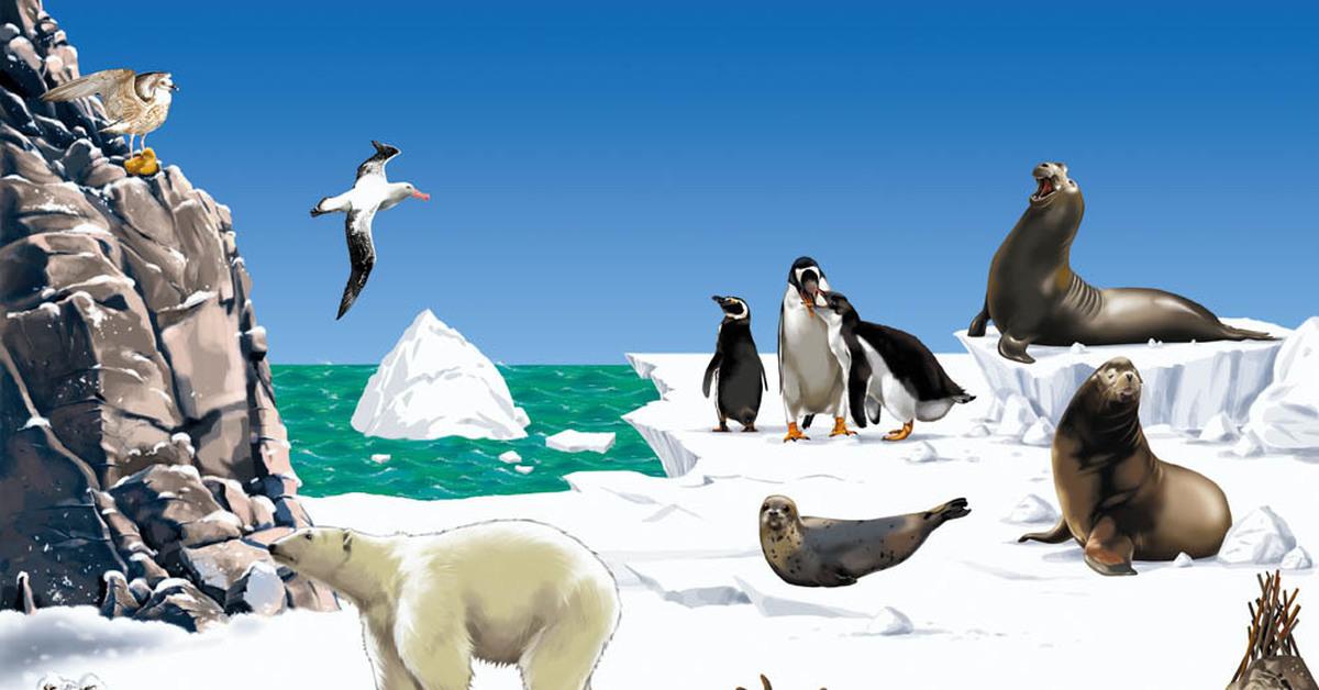 животные севера с картинками сегодняшней популярности