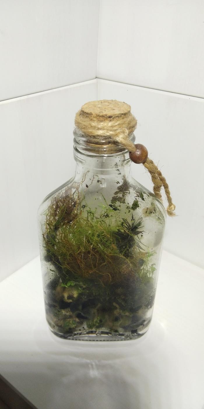 На тему замкнутых биосфер Сад, Рукоделие, Своими руками, Растения, Комнатные растения, Длиннопост, Замкнутая экосистема