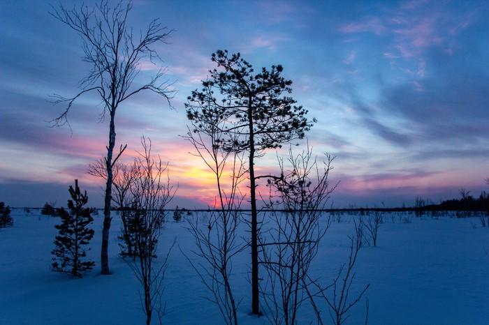 На сибирском болоте солнышко встаёт...