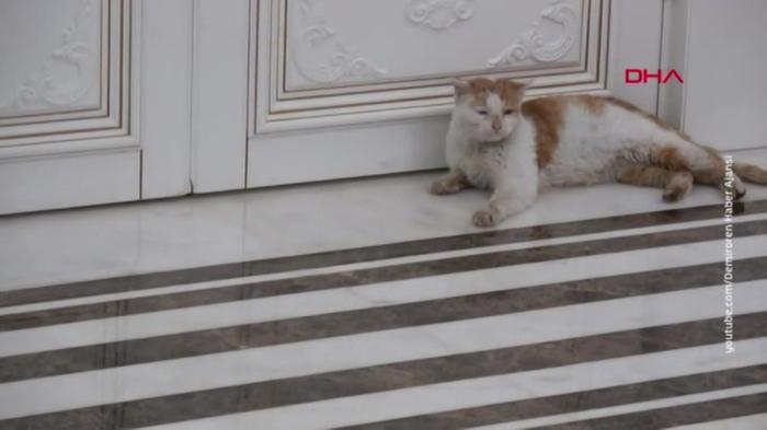 Мэр Антальи приютил спасенного из-под завалов котика и завел ему страницу в Твиттере