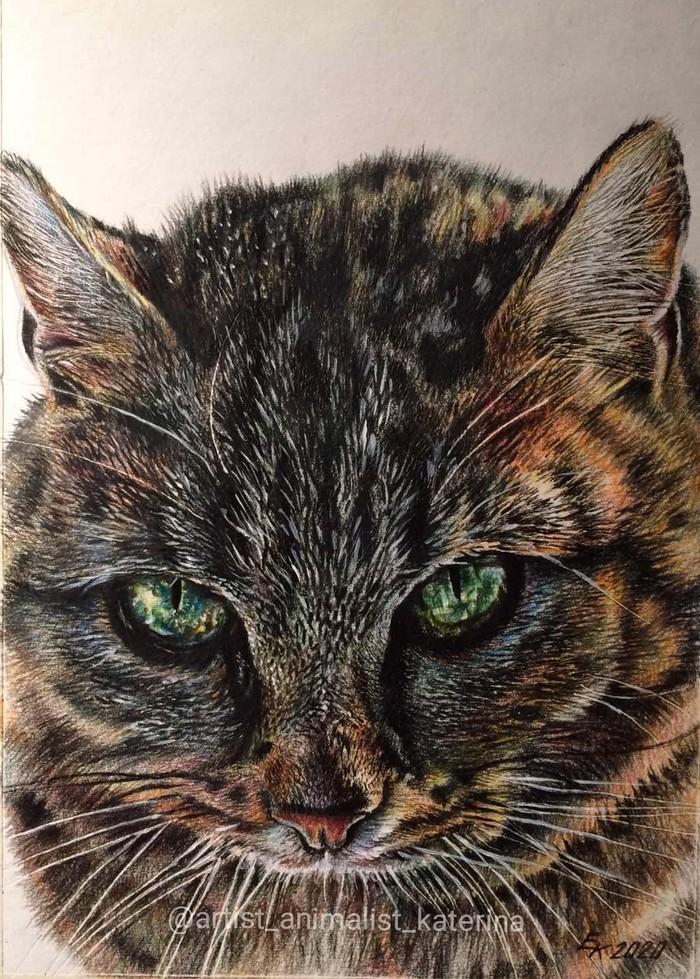 Гипнокот. Портрет выполнен цветными карандашами