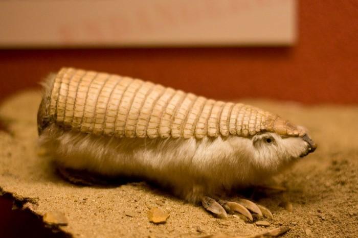 Самые удивительные животные планеты