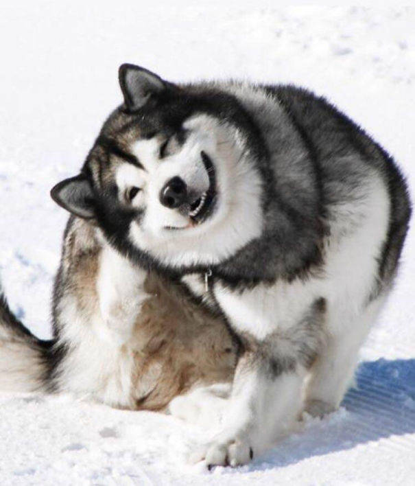 Пятничная собака-улыбака
