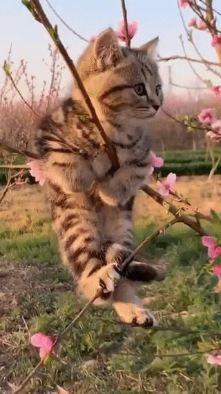 Весна - коты прилетели...