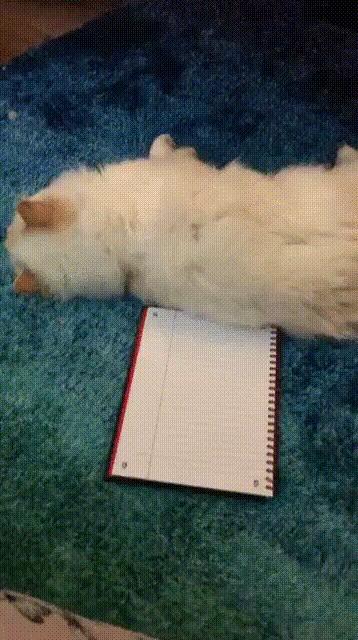 Игра в крестики нолики с котом