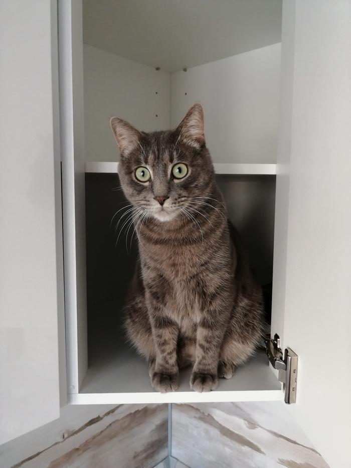 Собирал новую кухню. Кот принимал работу